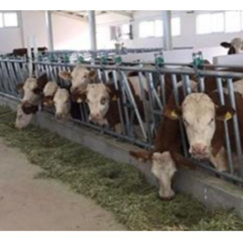 Bahavet Veterinerlik Tarım Hayvancılık Ltd.Şti